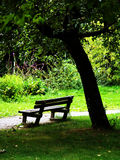 Relaxing in the park. A bench and a tree in a public park Stock Photos