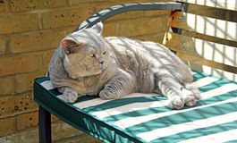Relaxing pedigree cat on bench Stock Image