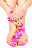 Pink manicure and pedicure with a orchid flower Stock Photography