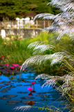 RELAXING POND OF LILIES AND TALL GRASS TOBAGO NATURE Stock Image