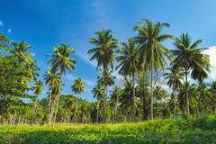 Relaxing on remote paradise beach. Untouched sandy Nang Thong Beach with palms trees in Khao Lak, Thailand. Summer holiday vacation background Stock Photo