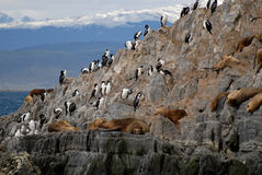 Relaxing Sealions And Sea Birds. Royalty Free Stock Photos