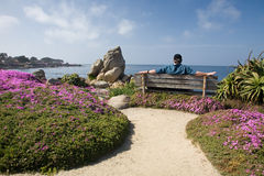 Relaxing at the Seaside. Man with graying brown hair wearing a hat, realizing by the seaside on a bench, surrounded by rocks, flowers and greenery. Spring or stock image