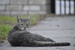 Relaxing on the Sidewalk Royalty Free Stock Photo