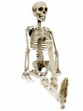 Relaxing Skeleton Royalty Free Stock Photos