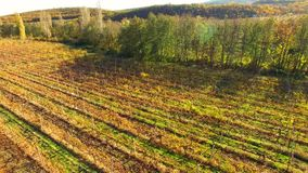 A relaxing sunny autumn landscape with fields, vineyards and mountains.