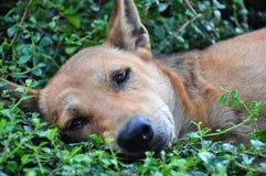 Relaxing time sleeping dog. Sleeping Dog on gladdr Stock Images