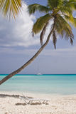 Relaxing tropical beach. Beach at the Saona island, Dominican Republic royalty free stock photography