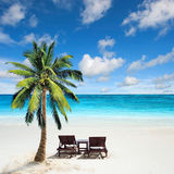 Relaxing under a palm tree. On remote beach stock photography