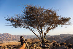 Relaxing Vacation in the UAE. Up in the mountains, someone is taking a rest from a hike up in the UAE mountains. A dry bush is standing and providing a bit of Stock Images