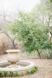 Relazione dell'albero alla fontana fotografia stock libera da diritti