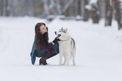 Relazioni dell'animale domestico e dell'essere umano Donna castana caucasica che gioca con Husky Dog Immagini Stock