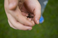 Release the frog. A boy is releasing the frog free royalty free stock photography