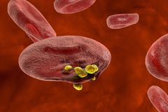 Release of malaria parasites from red blood cell. Malaria. Release of malaria parasites from red blood cell. Merozoites, 3D illustration Stock Photography