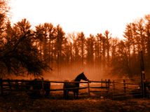 Released. A Horse in the mist stock images
