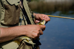 Releasing Brown Trout Stock Photography