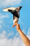 Releasing a Dove Stock Photo