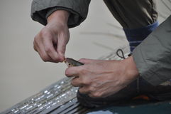 Releasing a fishing hook Royalty Free Stock Photo