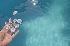 Releasing flowers into the pool Royalty Free Stock Image