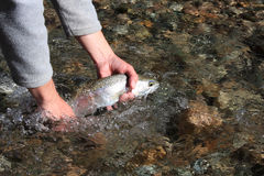 Releasing a trout (Argentina, Rivadavia River) Stock Photography
