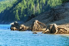 Remnants of trees along shoreline Stock Photography