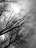 relection drzewo Obraz Stock