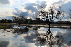 Storm Flooding El Nino. Clouds and tree reflecting off of a pool of water/ flooding and a storm Stock Photos