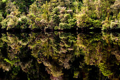 Relections, Gordon River. Trees reflected in the Gordon River, Tasmania Royalty Free Stock Images