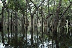 Relections van het water royalty-vrije stock foto's