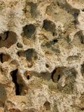 Relevación de la piedra caliza con los shelles Fotos de archivo