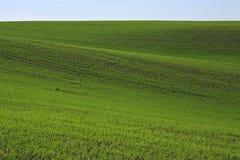 Relevación verde del campo. Imagen de archivo libre de regalías