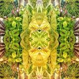 Relevo botánico en espejos foto de archivo libre de regalías