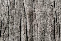 In reliëf gemaakte grijze houten textuur met houten vezel royalty-vrije stock afbeeldingen