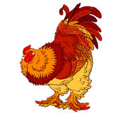Reliable orange red rooster on white. Vector illustration. A reliable orange red rooster on a white background. Fiery chicken a symbol of the Chinese new year Royalty Free Stock Images