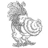 Reliable rooster black contour on white. Reliable rooster black contour line on white background. Big cock of breed Bramah. Fiery chicken a symbol of the Chinese Stock Photography