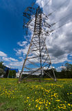 Reliance power. On the field of dandelions Royalty Free Stock Images