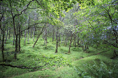 Relic deciduous forest after the rain. Stock Photography