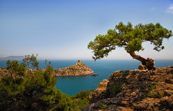 Relic juniper growing on the rock. Royalty Free Stock Photo