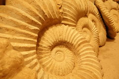 Relics, fossils in Morocco. Royalty Free Stock Photos