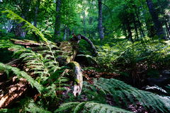 Relict Forest. Details of the Relict forest Stock Images
