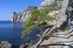 Free Relict Pine On The Sea Coast. Crimea. Royalty Free Stock Photos - 63411778