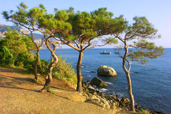 Relict pine tree on the beach. In the distance a boat, mountains Stock Images