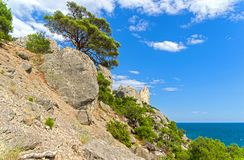Relict pines above the sea. Relict pines on a steep rocky shore above the sea. Crimea Stock Photo
