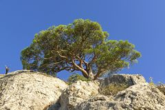 Relict rock on the top of the cliff. Against the background of a cloudless sky. Crimea Royalty Free Stock Photo