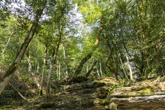 Relict trees on the rocks in the yew-boxwood grove Stock Images