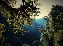 Relictbaumregenwald am Sonnenlicht stockfoto