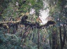 Relictbaumregenwald am Sonnenlicht lizenzfreie stockbilder