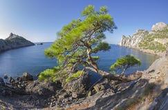 Relictkiefer am Gebirgsweg über dem Meer krim Stockfotografie
