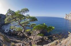 Relictkiefer am Gebirgsweg über dem Meer krim Lizenzfreies Stockfoto
