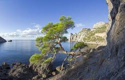 Relictpijnboom bij de bergweg over het overzees crimea royalty-vrije stock foto
